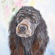 Poodle Mix  Art Print