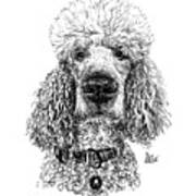 Poodle @standerdpoodle Art Print
