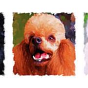 Poodle Trio Print by Jai Johnson