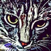 Face Of The Feline Art Print