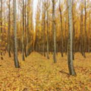 Poplar Tree Farm In Oregon Art Print