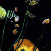 Poppies 2 Art Print by Dana Patterson