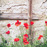 Poppies Against Wall Art Print