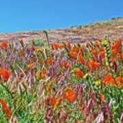 Poppies And Fiddleneck In Antelope Valley Ca Poppy Reserve Art Print