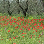Poppies And Olives Art Print