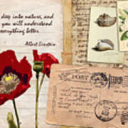 Poppies And Postcards Art Print