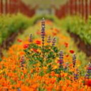 Poppies And Wildflowers In Vineyard Art Print