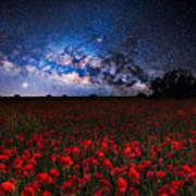 Poppies At Night Art Print