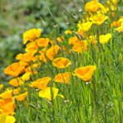 Poppies Hillside Meadow Landscape 19 Poppy Flowers Art Prints Baslee Troutman Art Print