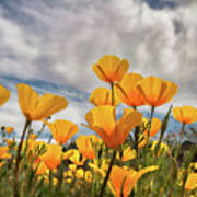 Poppies In The Wind Part Two  Art Print