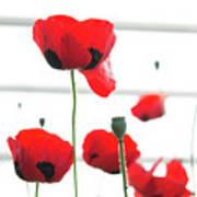 Poppies, Lovely Poppies Art Print