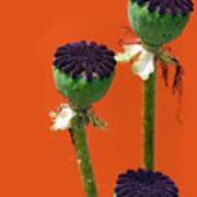 Poppies On Orange Art Print