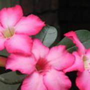Poppin Pink Flowers Art Print