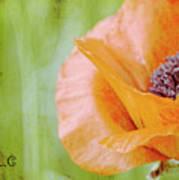 Poppy 9 Art Print