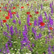Poppy And Wild Flowers Meadow Nature Scene Art Print
