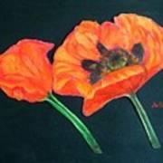Poppy Bud And Bloom Art Print