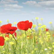 Poppy Flowers Nature Spring Scene Art Print
