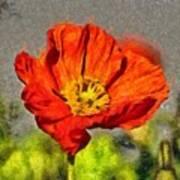 Poppy - Id 16235-142749-5072 Art Print