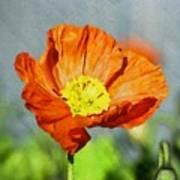 Poppy - Id 16235-142758-2720 Art Print