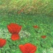 Poppy In Country Art Print