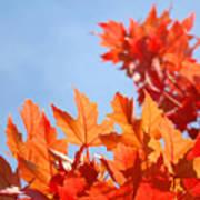 Popular Autumn Art Red Orange Fall Tree Nature Baslee Troutman Art Print