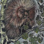 Porcupine In Aspen Art Print