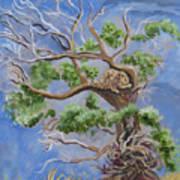 Porcupine In Cottonwood Art Print