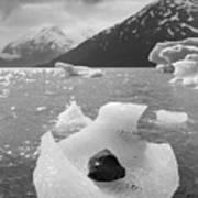 Portage Glacier, Ice Basket Art Print