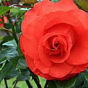 Portland Rose Garden Art Print