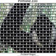 Portland Zoo Art Print