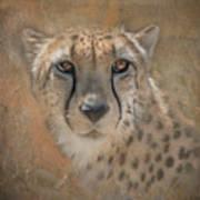 Portrait Of A Cheetah Art Print