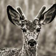 Portrait Of A Male Deer II Art Print