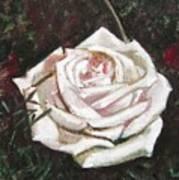 Portrait Of A Rose 3 Art Print