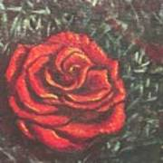 Portrait Of A Rose 4 Art Print