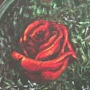 Portrait Of A Rose Art Print