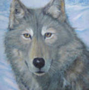Portrait Of A Wolf Art Print