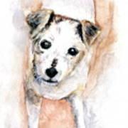 Portrait Of Abby - Jack Russell Terrier Art Print