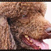 Portrait Of Guinness Art Print