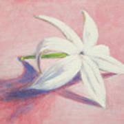 Portrait of the Jasmine flower Art Print