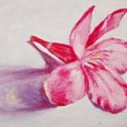 Portrait Of The Kaneri Flower. Oleander Art Print