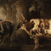 Portrait Of Two Oxen - The Property Of The Earl Of Powis Art Print