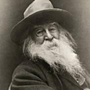 Portrait Of Walt Whitman Art Print