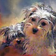 Portrait Of Yorkshire Terrier Puppy Dogs Art Print