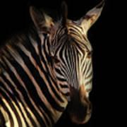 Portrait Of Zebra Art Print