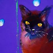 Posh Tom Cat Art Print