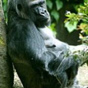 Posing Gorilla Art Print
