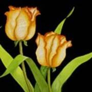 Posing Tulips Art Print