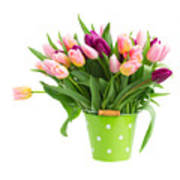 Pot Of Pink And Violet Tulips Art Print