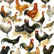 Poultry Art Print