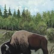 Prairie Bison Art Print